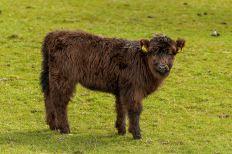 2015-05-08-Leckmelm Farm-9481